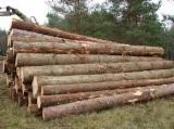Nadelrundholz Gesuche - Schnittholzstämme, Sitka-Fichte