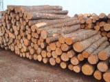 Nadelrundholz Gesuche - Schnittholzstämme, Kiefer  - Rotholz