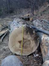 Hardwood  Logs For Sale Romania - 25-80 cm Saw Logs Romania