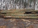 Bosques y Troncos - Comprado Troncos Para Aserrar Haya, Roble Polonia