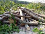 Firewood, Pellets And Residues - Firewood Cleaved for sale, 25-35 cm
