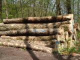 Germany Hardwood Logs - Red Oak and Ash Saw Logs, diameter 35-55 cm