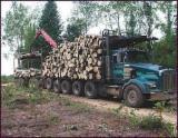 Waldgebiete Erle - USA, Erle