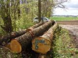 Germany Hardwood Logs - Oak Saw Logs for Sale, diameter 30-48 cm