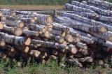 Laubrundholz  Zu Verkaufen - Schnittholzstämme, Birke, Espe, Aspe
