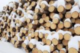 Softwood  Logs For Sale - Pine/Spruce Saw Logs, diameter 8-45 cm