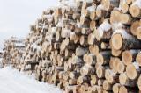 Laubrundholz  Zu Verkaufen - Furnierholz, Messerfurnierstämme, Birke