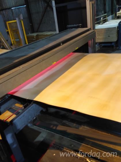 Birch--Spruce--Larch-veneer--Rotary-Cut