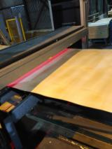 Rotary Cut Veneer - Birch, Spruce, Larch veneer, Rotary Cut, 1.0-2.5 mm thick