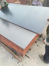 Шпон мебельные щиты и плиты - Ламинированная Фанера (Коричневая Пленка), Тополь