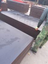 木皮和单板 - 覆膜胶合板(黑膜), 桉树