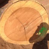 Vereinigte Arabische Emirate - Fordaq Online Markt - Schnittholzstämme, Iroko