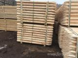 Softwood  Logs - Pine Stakes