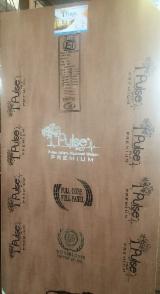 Sperrholz Indien - Rohsperrholz - Industriesperrholz