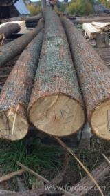 25+ cm Tilia  Saw Logs