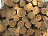 Teak Hardwood Logs - Teak Logs 23-50 cm