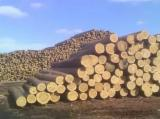 Softwood  Logs - Buy Pine Logs 26 cm