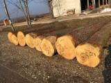 Bulgaria Supplies - European Oak Saw Logs, diameter 40-70 cm