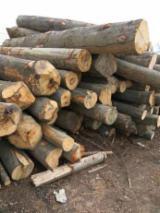 Hardwood  Logs For Sale - 28+ cm Beech Saw Logs Romania