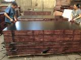 Poplar Plywood - AAA Grade Poplar / Eucalyptus Film Faced Plywood