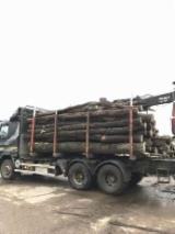 Hornbeam, Oak, Turkish Oak  Firewood/Woodlogs Not Cleaved