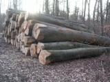 Beech  Hardwood Logs for sale. Wholesale exporters - Beech Saw Logs, diameter 18+ cm