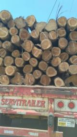 Wälder Und Rundholz Südamerika - 4-seitig Sägegestreiftes Rundholz, Teak