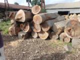 Ghana - Fordaq Online market - Sanya Saw Logs, diameter 50 cm