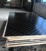 Buy Or Sell  Film Faced Plywood Black Film - Birch Film Faced Plywood, UV, 5.2; 12; 15; 18 mm