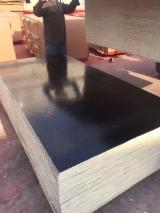 Poplar Black Film Faced Plywood