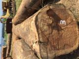 Want to Sell Ready Stock Iroko Logs, diameter 60+ cm