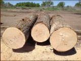Oak  Hardwood Logs - Red Oak, White Oak, Walnut and/or Hickory logs in prime/veneer quality Grade 1/a (4SC)