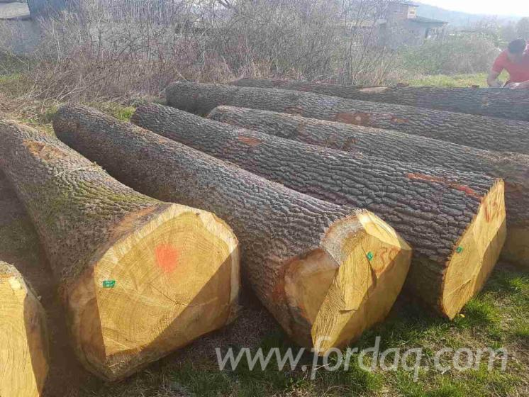 Red oak white walnut and or hickory logs in prime