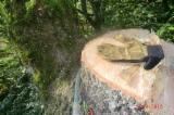 Servizi Forestali - Abbattimento, Francia