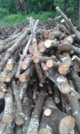 Buy Or Sell Hardwood Firewood - Rubberwood Firewood for Mushroom Beds