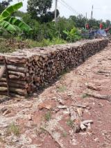 Buy Or Sell Hardwood Firewood - Cashew Logs for Mushroom Beds