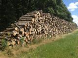 Beech  Hardwood Logs for sale. Wholesale exporters - Beech/Hornbeam/Red Oak Firewood, 2 m long