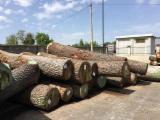 Veneer Logs - Sell Oak Veneer Logs
