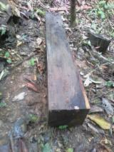 Belgium Hardwood Logs - Ebony Square Logs 20+ cm