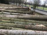 Forest And Logs Germany - Poplar Peeling Logs 30+ cm