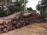 森林和原木 亚洲  - 锯材级原木, 龙脑香木, FSC