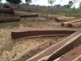 Wälder Und Rundholz Nordamerika - 4-seitig Sägegestreiftes Rundholz, Guayacan, ISO-9000