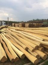 Hardwood Logs For Sale - Register And Contact Companies - Acacia Poles 8+ cm