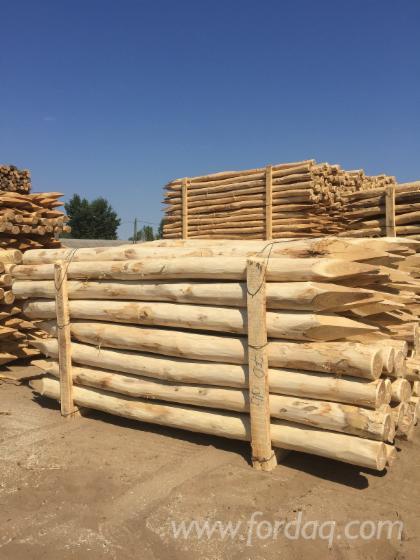 Acacia Stakes for Fences, diameter 8+ cm