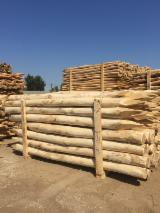 Hungary Hardwood Logs - Acacia Stakes for Fences, diameter 8+ cm