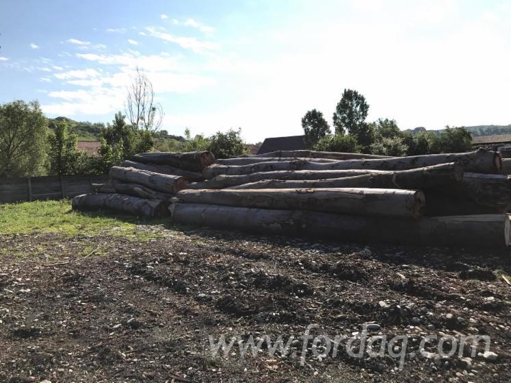28--cm-Beech-Saw-Logs-from-Romania