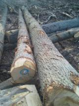 Belgium Hardwood Logs - Red Oak Logs