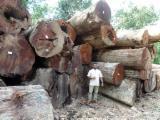 Merbau Hardwood Logs - Chengal / Merbau / Teak Logs