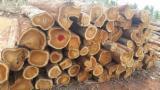 Hardwood  Logs - Teak Saw Logs, diameter 25+ cm