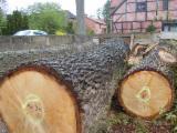 Hardwood  Logs - Oak Saw Logs, diameter 60-90 cm
